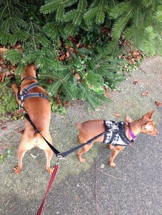 Samantha está en la búsqueda de otros perros.