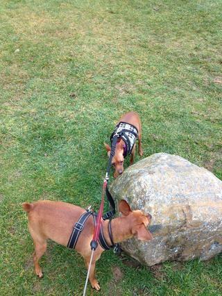 Las rocas son también una atracción popular en la caminata.
