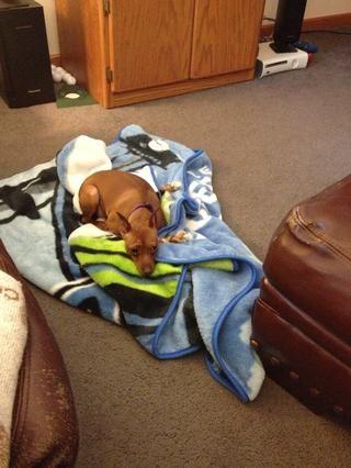 Y el otro cachorro mirando para tomar una siesta demasiado ??????