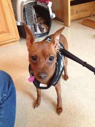 Un cachorro listo para ir ... Bien, Samantha?