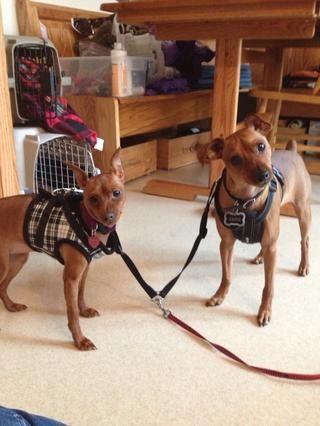 Ahora los dos cachorros están listos ... ¿verdad, Jack?