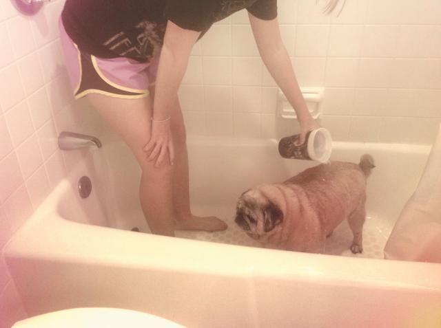 Use una taza para conseguir su perro's fur wet.
