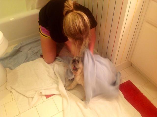 Gire la llave del agua y el uso de una toalla para secar a su perro por completo.