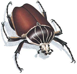 Fotografía - Insectos