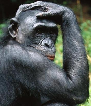 Fotografía - ¿Hay alguna diferencia entre los monos y los simios?