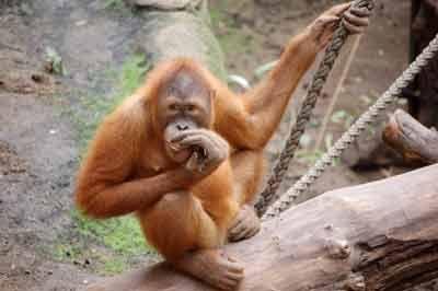¿Hay alguna diferencia entre los monos y los simios?
