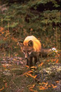 Fotografía - Parque Nacional Isle Royale