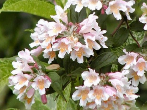 Fotografía - Más plantas con flores