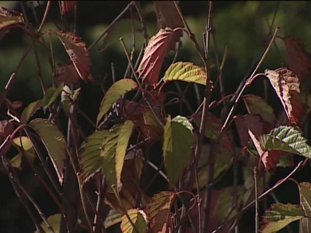 Fotografía - Más flores y arbustos