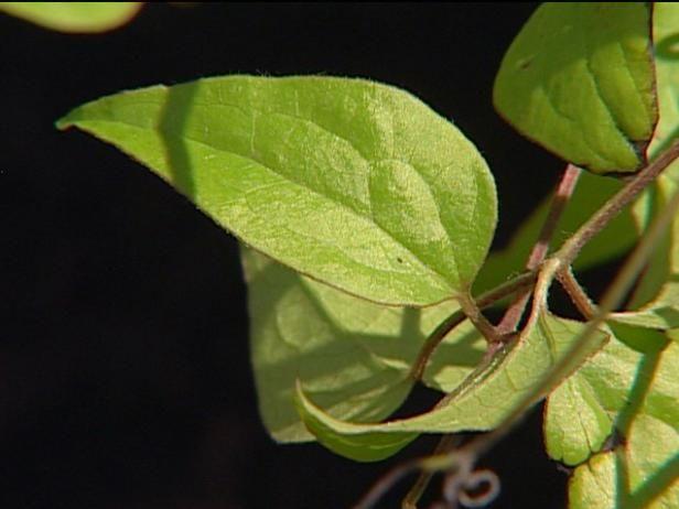 Fotografía - Más especies de plantas
