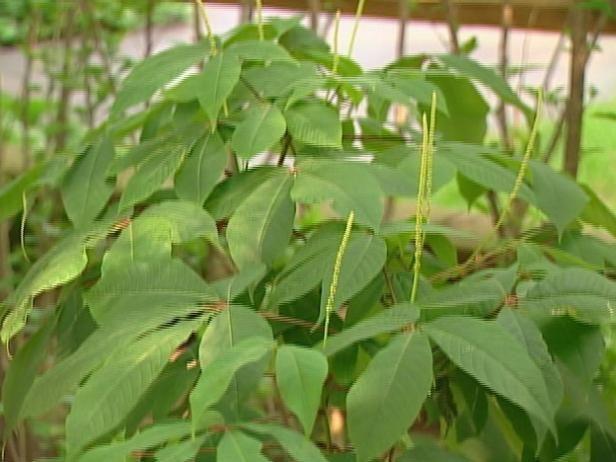 Fotografía - Más variedades de plantas
