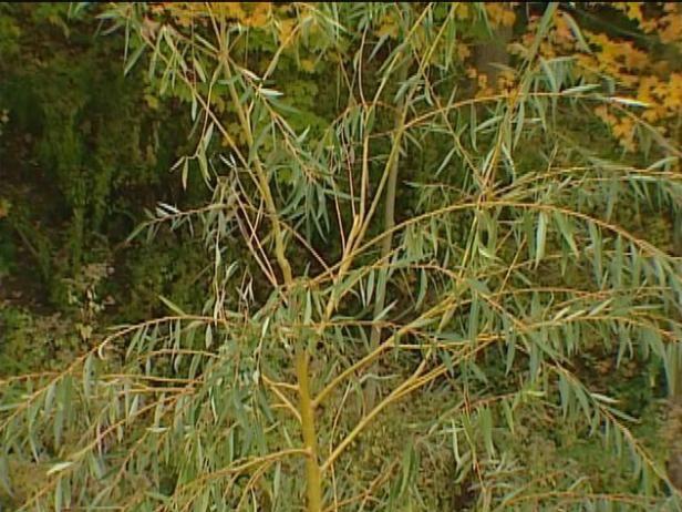 Fotografía - Más plantas y follaje