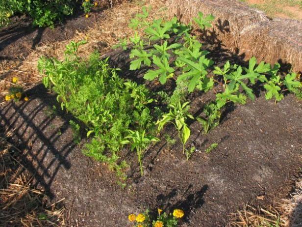 Fotografía - Cuidado de la salud vegetal ecológica