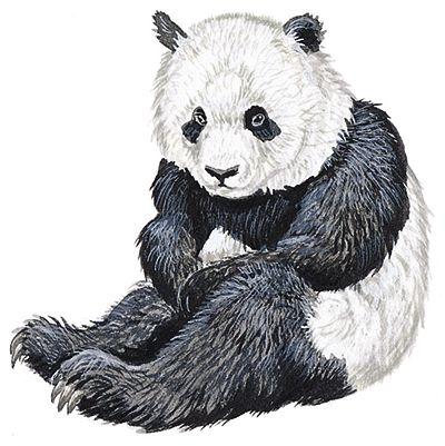 Fotografía - Panda