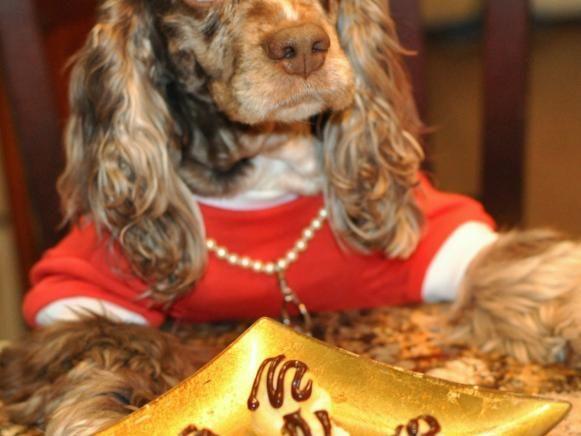 Fotografía - Mantequilla de maní sueño hincha golosinas para perros