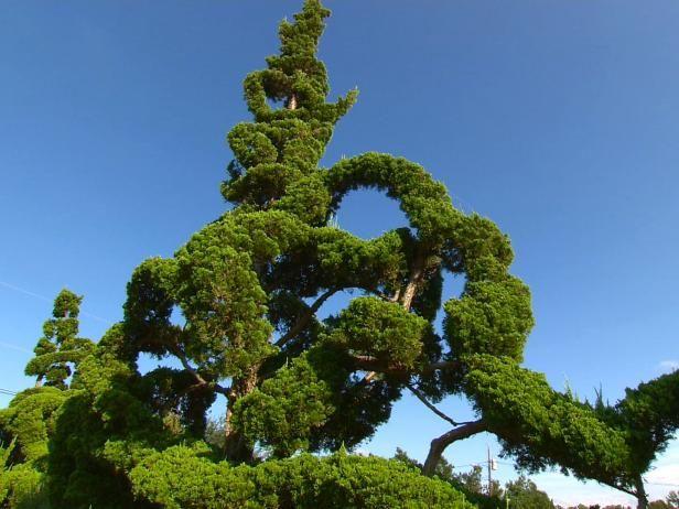 Fotografía - Jardín topiario Perla de Fryar: un corte por encima del promedio
