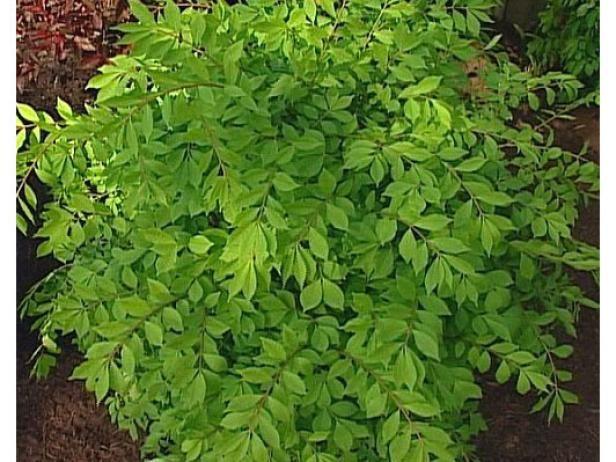 Fotografía - Las plantas perennes y arbustos