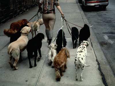Fotografía - Cuidadores de mascotas 101