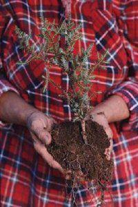 Plantar un jardín