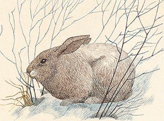 Fotografía - Los conejos y las liebres