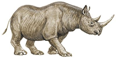 El rinoceronte negro
