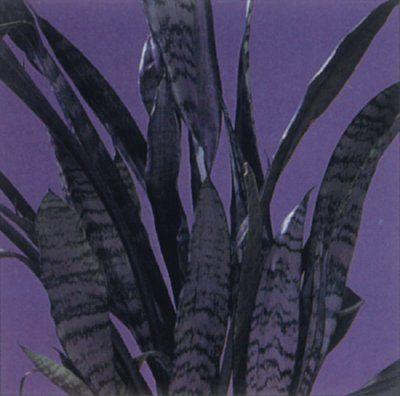 Serpiente Planta