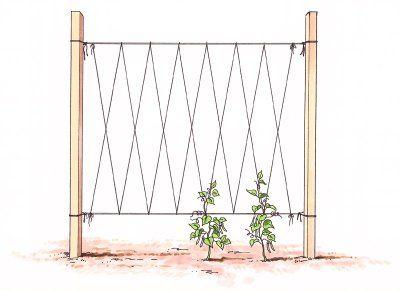 Replanteo Verduras