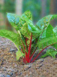A partir Nuevas Plantas Vegetales de piezas