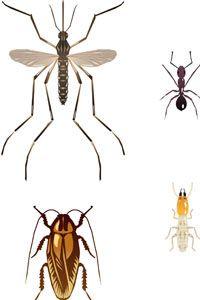 carta de insectos