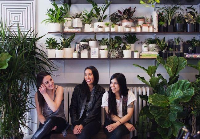 Fotografía - Esta compañía ofrece plantas de interior directamente a su puerta