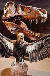 t cráneo rex y el cóndor