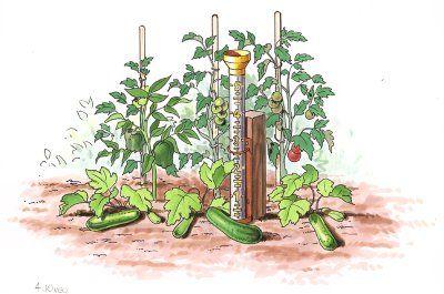 Riego de un jardín de verduras