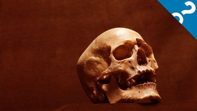Lo que las cosas:! 5 Señales de una extinción masiva Moderno