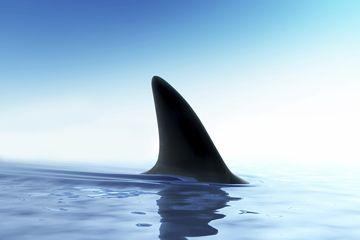 Aleta de tiburón por encima del agua del océano