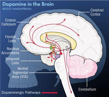 dopamina en el cerebro