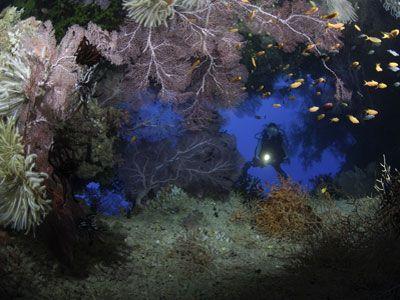 Fotografía - Qué criaturas del mar se puede nadar con?