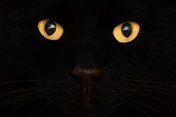 Fotografía - ¿Por qué la gente es tan supersticiosa acerca de los gatos?