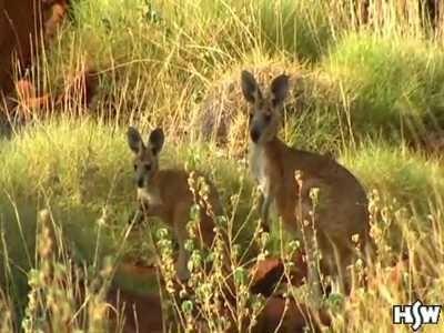 Escénico Outback