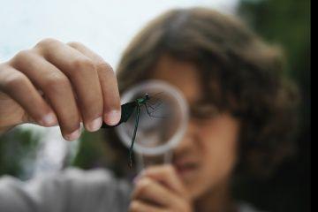 Fotografía - ¿Por qué estudiamos bichos?