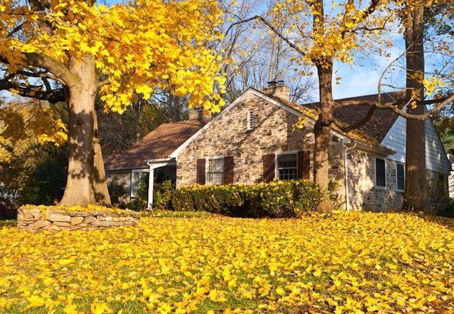 Prevención de caídas de Plagas - Autumn House