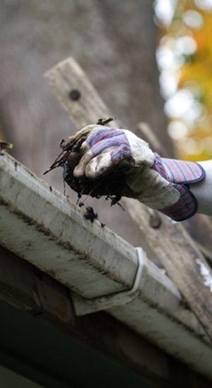 Prevención de caídas de Plagas - Limpieza de las canaletas